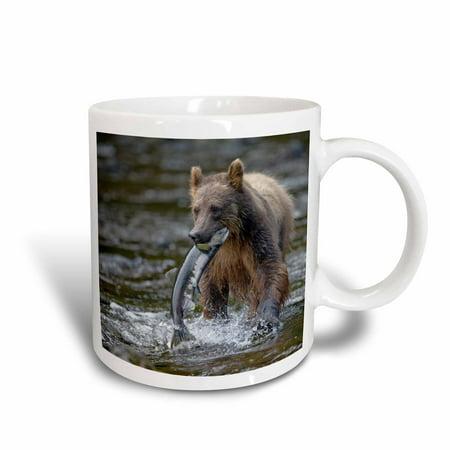 3dRose Alaska, Brown Bear, Sockeye Salmon in Pavlof Harbor - US02 PSO0624 - Paul Souders, Ceramic Mug, 11-ounce