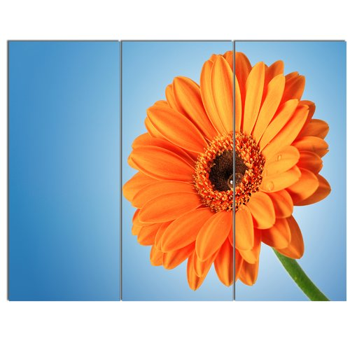 Design Art 'Orange Daisy Gerbera Flower on Blue' 3 Piece Photographic Print on Wrapped Canvas Set