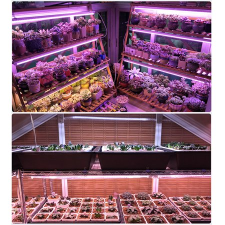 2 Packs 100W LED Hydroponic Grow Light Full Spectrum Outdoor/Indoor, 3000lm Plant Grow Flood Light Growing Lamp for Hydroponics Greenhouse Garden Plant Flower Vegetable - image 6 of 8
