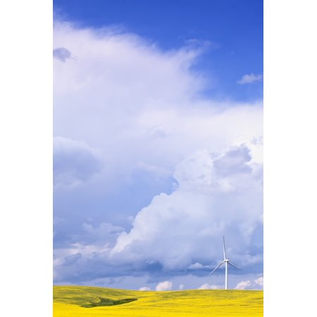 Wind Turbines Design - Storm Clouds Over Canola Field With Wind Turbine St Leon Manitoba Stretched Canvas - Ken Gillespie  Design Pics (11 x 17)