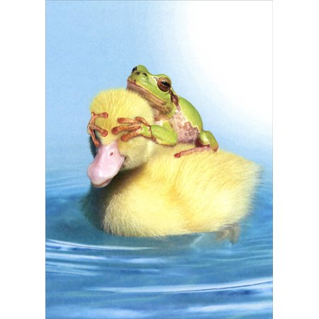 - Tree-Free Greetings Duck Duck Frog Funny / Humorous Birthday Card