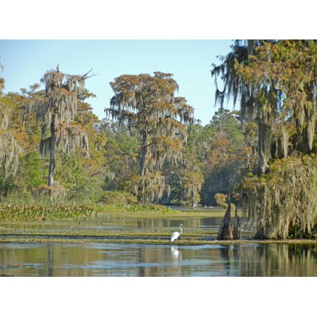 - Framed Art For Your Wall Usa Wakulla Springs Florida Manatee 10x13 Frame