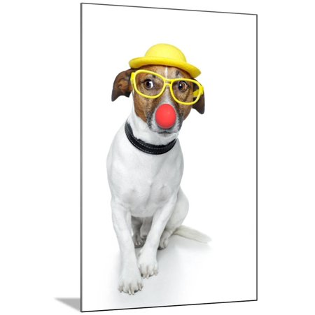 Funny Dog Nose Hat Glasses Wood Mounted Print Wall Art By Javier Brosch - Funny Nose And Glasses