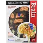 Learning Resources Brain Anatomy Model, 31 Piece, Ages 5+