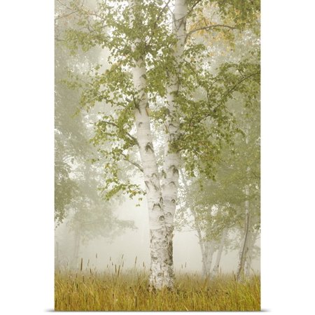 Great Big Canvas Susan Dykstra Poster Print Entitled Birch Trees In The Fog  Thunder Bay  Ontario  Canada