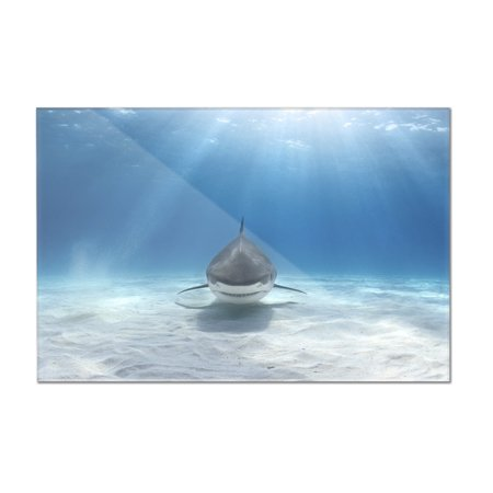 Tiger Shark Swimming on Ocean Floor Lantern Press Photography 18x12 Ac