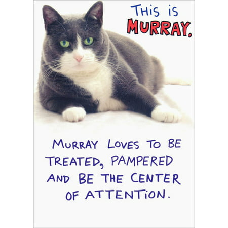 Recycled Paper Greetings Murray Funny / Humorous Cat Birthday