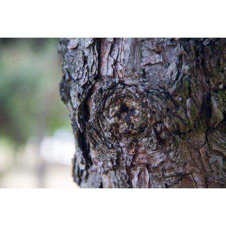 Wood Dead Eye - LAMINATED POSTER Era Memory Dead Wood Memories In My Eyes Tree Wood Poster Print 24 x 36