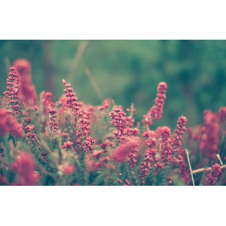 Beautiful Wild Flowers Home Wall Decor Photography Decorations Prints