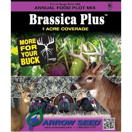 Image of Brassica Plus Food Plot