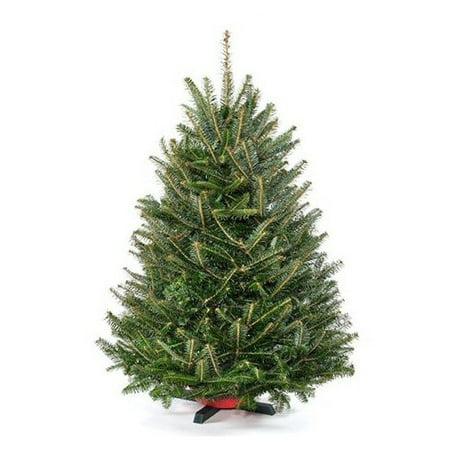 real christmas trees delivered 3 green fir freshly cut christmas tree with stand - Real Christmas Trees Delivered