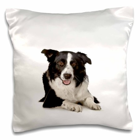 - 3dRose Border Collie, Pillow Case, 16 by 16-inch