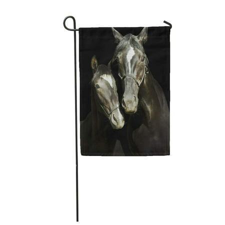 LADDKE Two Black Horses White Blaze Head Halter are Standing Garden Flag Decorative Flag House Banner 12x18 -