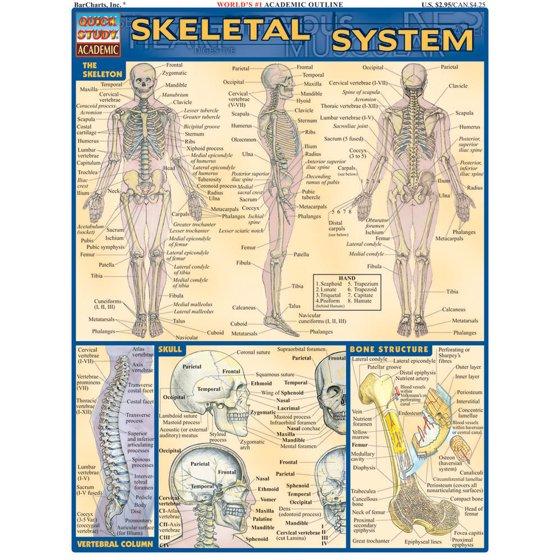 Skeletal System Walmart