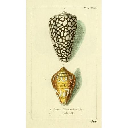 Naturgeschichte des Thierreichs 1780 Shells Conus Canvas Art - Daniel Sotzmann (24 x 36)