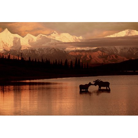 Denali Moose (Moose Kissing In Wonder Lake Denali Np Digital Composite PosterPrint )