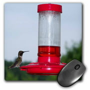 3dRose Hummingbird On Feeder, Mouse Pad, 8 by 8 inches
