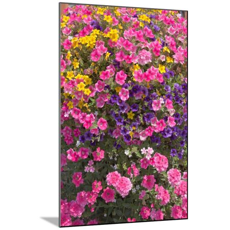 Flowering plant growing in nursery, Canby, Clackamas County, Oregon, USA Wood Mounted Print Wall (Canby Woods)