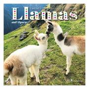 """2021 Llamas Mini 7""""x7"""" Calendar"""