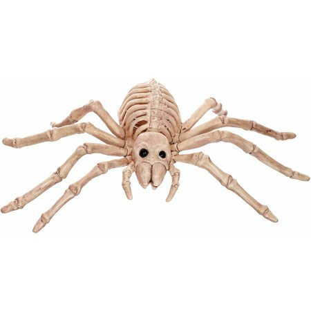 Official Crazybonez Faux Spider Skeleton - Parrot Skeleton