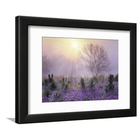Foggy sunrise, South Llano River State Park, Texas Framed Print Wall Art By Tim