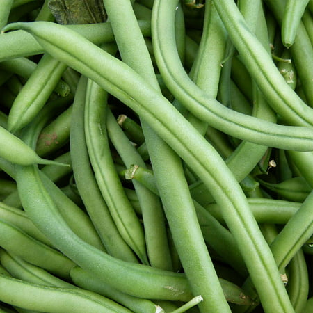 Blue Lake FM1K Pole Bean Seeds (Treated) - 1 Lb - Non-GMO, Heirloom - Green Bean Vegetable Garden Seeds - Phaseolus