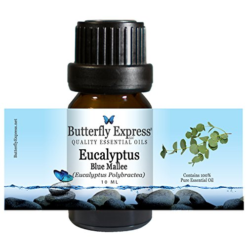 Eucalyptus Blue Mallee Essential Oil 10ml - 100% Pure - by Butterfly Express