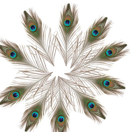 Ktaxon 10pcs Natural Real Peacock Tail Feathers About 10-12 Inches Home Party Decor US