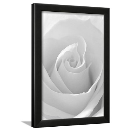 Black And White Rose Abstract White Flower Photography Framed Print Wall Art By Anna Miller