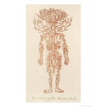 The Arteries of the Human Body Print Wall Art By Ebenezer Sibly