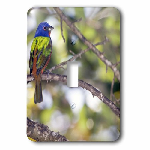 3dRose Mating Pair of Painted Bunting birds - US10 BFR0062 - Bernard Friel, Single Toggle Switch