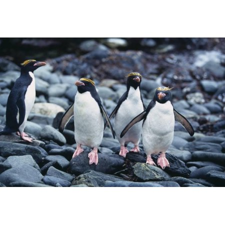 Macaroni Penguins on Rocks Print Wall Art By - Halloween Macaroni Art