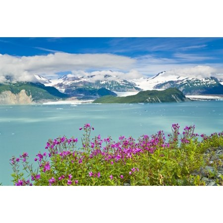Dwarf Fireweed Grows Along The Shore Of Iceberg Filled Alsek Lake At Glacier Bay National Park Summer In Southeast Alaska Stretched Canvas - Michael DeYoung  Design Pics (17 x 11)