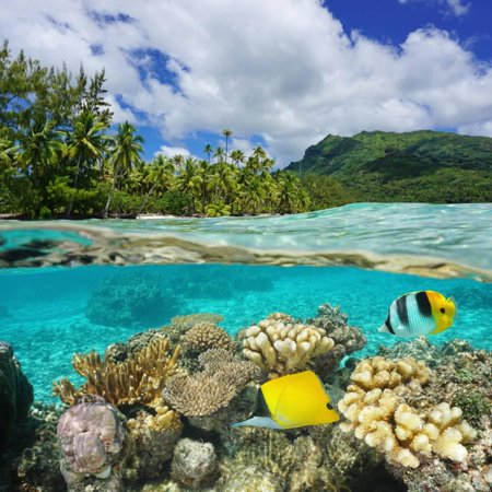 Above and Below Water Surface, Lush Shore with Coral and Tropical Fish, French Polynesia Print Wall Art By Seaphotoart