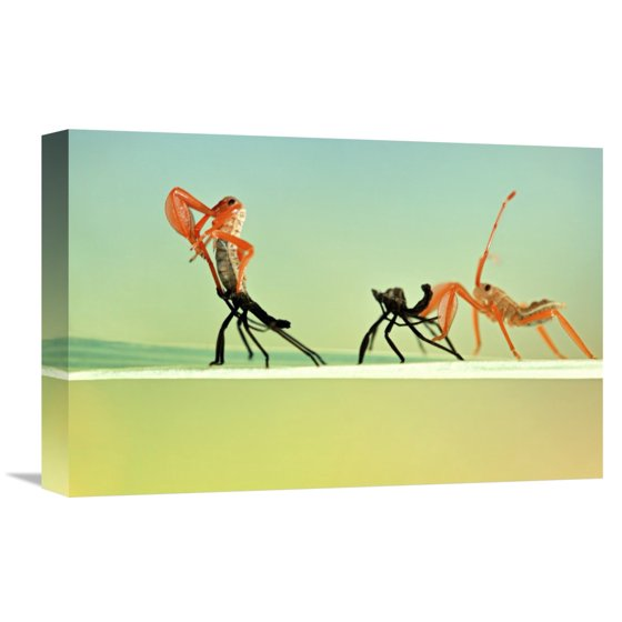 Global Gallery Donald Jusa \'Re-Born\' Canvas Wall Art - Walmart.com