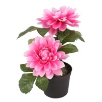 "7"" Potted Pink Dahlia Flowers"