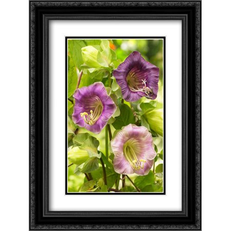 Cup-and-saucer Vine flowers 2x Matted 18x24 Black Ornate Framed Art Print by VisionsPictures