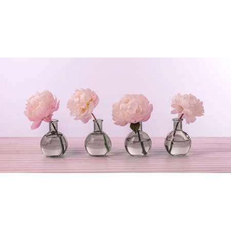 Peonies in glass bottles Rolled Canvas Art - Assaf Frank (10 x 20)