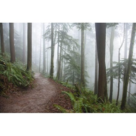 Wildwood Trail In Forest Park. Portland, Oregon Print Wall Art By Justin Bailie](Halloween Stores In Portland Oregon)