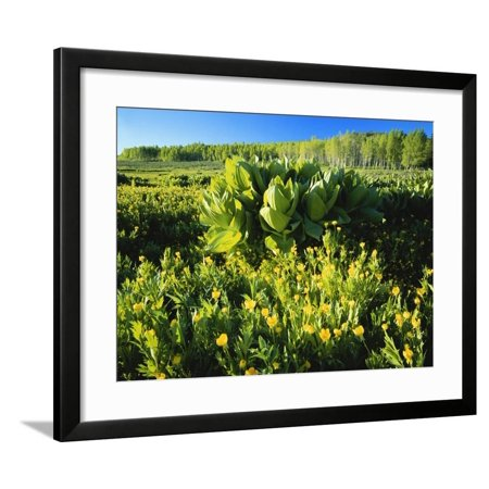 Plants Growing in Field, Logan River, Franklin Basin, Bear River Range, Cache National Forest Framed Print Wall Art By Scott T. Smith (Franklin Frames)