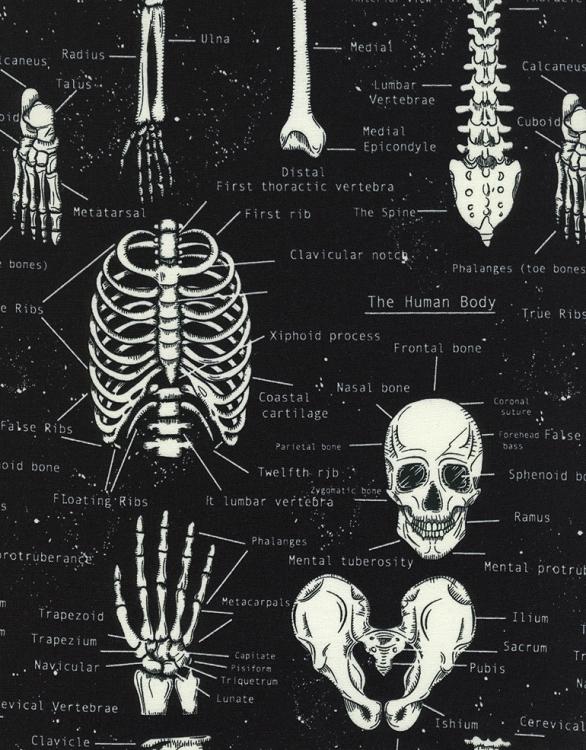 Dinosaur Skeletons-Glow In The Dark-BTY-Timeless Treasures-Names of Bones