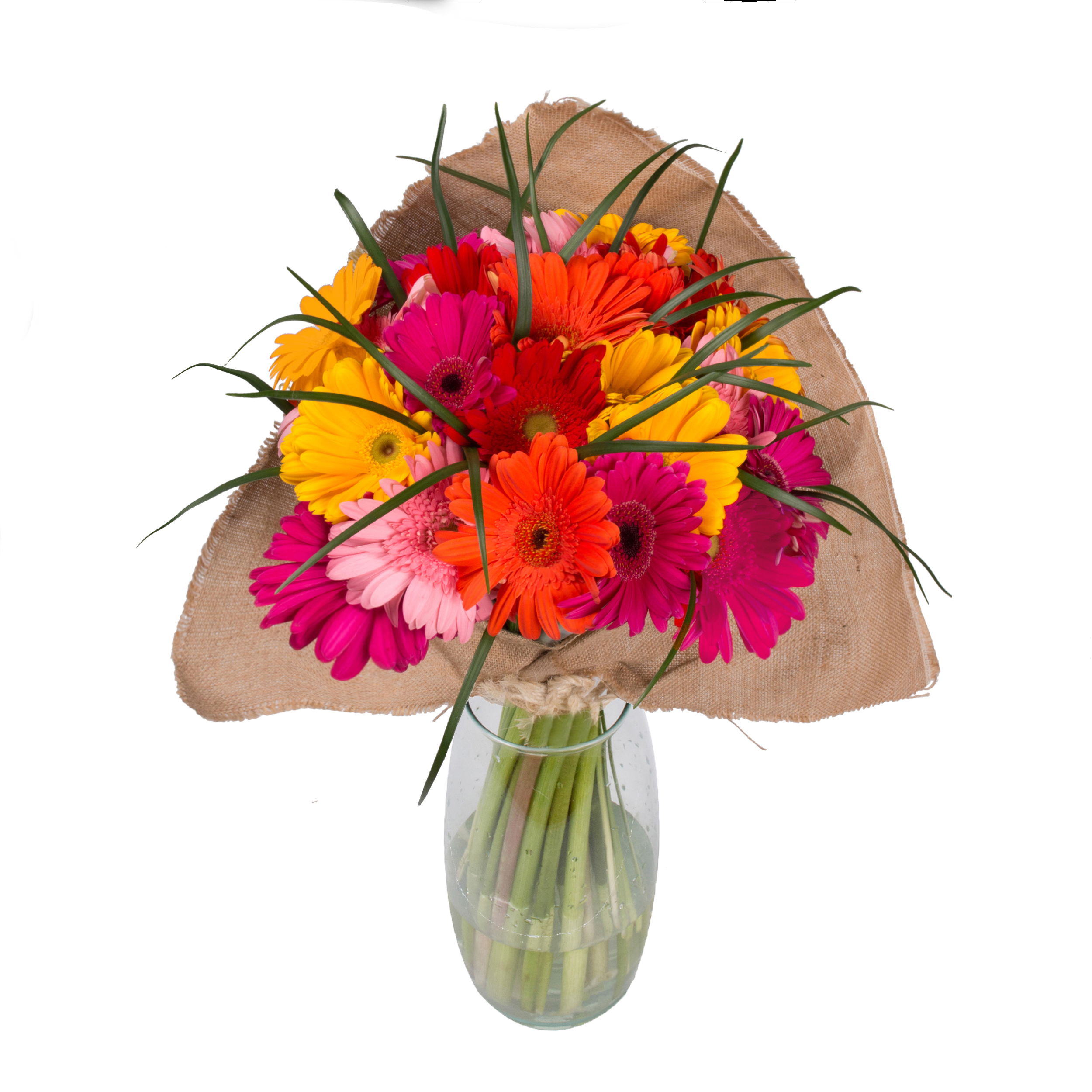 Rainbow Gerbera Bouquet with Burlap - 31 Stems