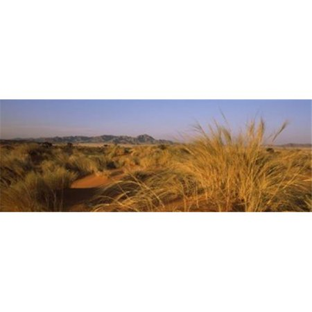 Panoramic Images PPI125581L Grass growing in a desert  Namib Rand Nature Reserve  Namib Desert  Namibia Poster Print by Panoramic Images - 36 x 12 - image 1 of 1