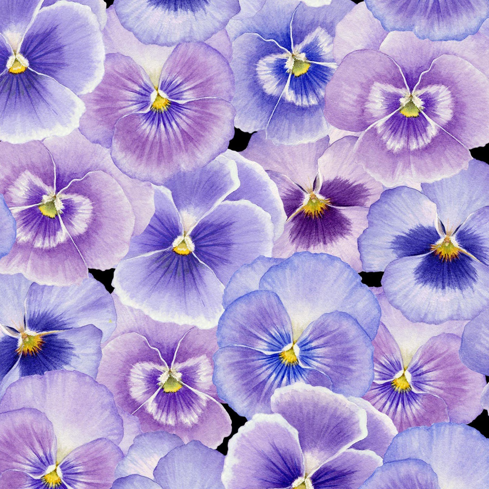 Pretty as a Pansy Floral ~Packed Pansies~Cotton Fabric by Henry Glass