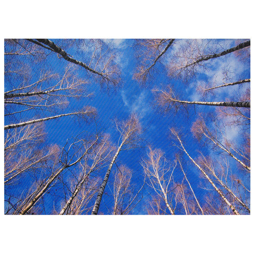 Oriental Furniture Treetops Photographic Print on Wrapped Canvas