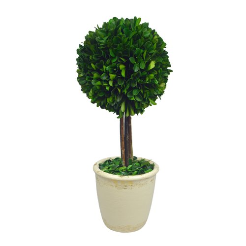 Fleur De Lis Living Boxwood Ball Topiary in Pot