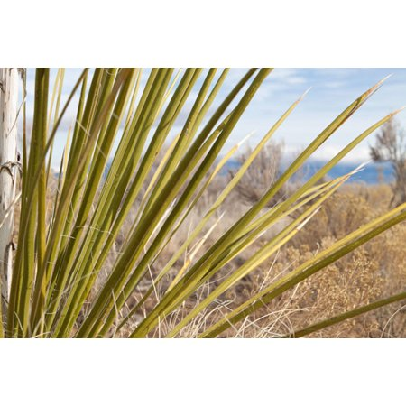Century Plant II, Fine Art Photograph By: Dana Styber; One 36x24in Fine Art Paper Giclee Print