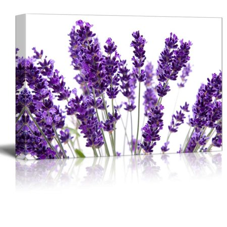 - Macro View of Lavender over White Background Beautiful Floral Flower Photograph - Canvas Art Wall Decor - 12