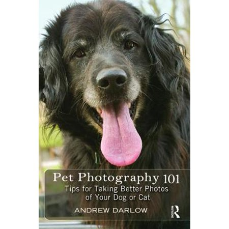 Pet Photography 101 : Tips for Taking Better Photos of Your Dog or Cat (Taking Dogs To Canada)