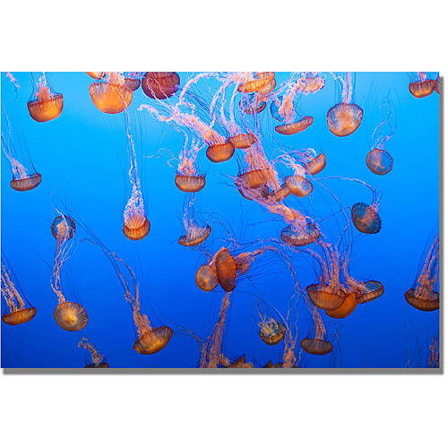 "Trademark Fine Art ""Jellyfish IV"" Canvas Wall Art by Ariane Moshayedi"